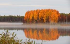 Picture autumn, haze, quiet, pond, forest