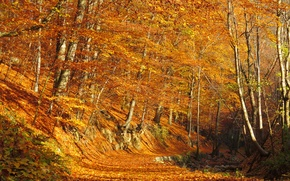 Picture autumn, forest, leaves, trees, foliage, forest, falling leaves, grove, path, trees, Autumn, leaves, path