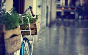 Picture flowers, bike, great, widescreen, bicycle, blur, HD wallpapers, Wallpaper, the city, different, greens, full screen, ...