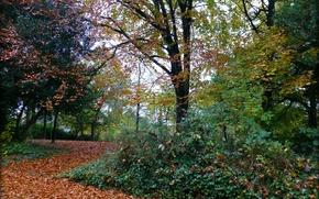 Picture autumn, foliage, track, Autumn, leaves, path, fall