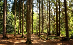 Picture forest, trail, pine