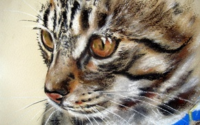 Picture eyes, cat, look, blue, animal, muzzle, collar, painting