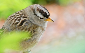 Picture green, bird, Sparrow