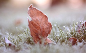 Picture frost, grass, macro, sheet