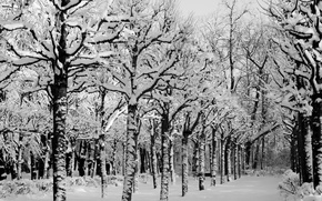 Picture winter, snow, trees, Park, Nature, frost, track, alley, trees, nature, the ranks, park, winter, snow, ...