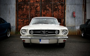 Picture white, gate, Mustang