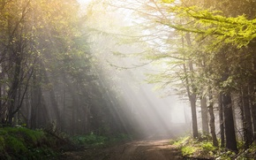 Picture road, light, landscape, morning