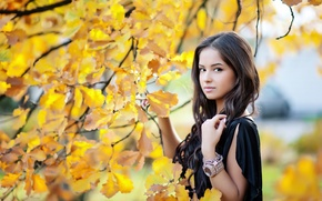 Picture autumn, look, girl, pose, yellow leaves, beauty