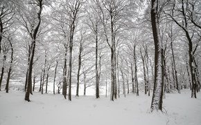 Picture winter, forest, snow, trees, England