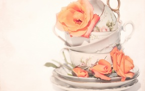 Picture roses, Cup, buds, saucers