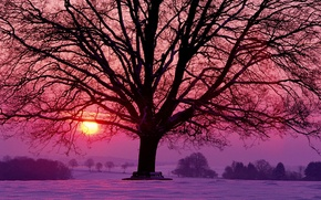 Picture the sun, snow, trees, sunset, red, tree, lilac, Winter, the evening, raspberry