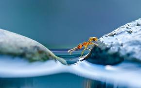 Wallpaper water, macro, ant, Islands