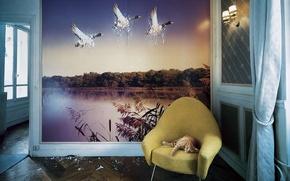 Wallpaper Wallpaper, duck, Koshak, Wall, scratches