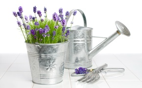 Picture flowers, bucket, lake, lavender
