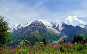 Picture flowers, mountains, nature, Alps, meadow, Alps, Blanc, Mont Blanc