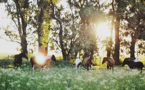 Picture field, trees, horse, sunrise