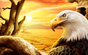 Picture the sun, eagle, desert, figure