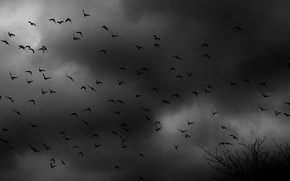 Picture birds, clouds, the darkness, pack, shrub