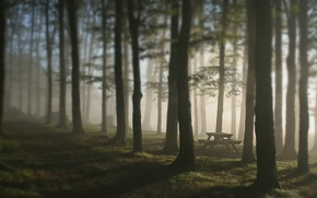 Picture forest, trees, fog, table, bench