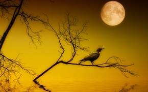 Picture night, style, the moon, Raven, installation