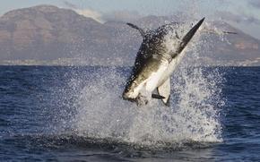 Picture the ocean, fish, shark, mining, shark