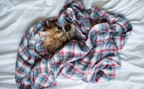 Picture cat, tangle, kitty, clothing, sleep, cell, sleeping, shirt, Daisy, Ben Torode