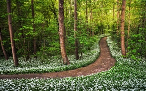 Picture forest, grass, trees, flowers, path