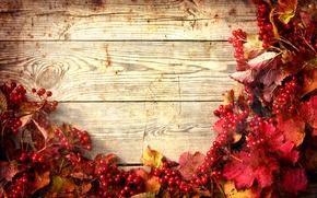 Picture autumn, leaves, twigs of viburnum, twigs of viburnum