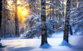 Wallpaper winter, forest, the sun, snow, nature