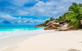 Picture sand, sea, beach, shore, summer, beach, sea, sand, shore, paradise, palms, tropical