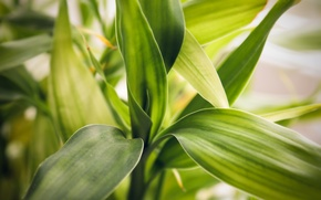 Picture leaves, macro, background, Wallpaper, plant, spring, Bamboo