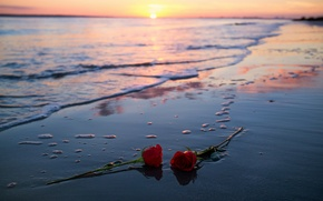 Picture sea, sunset, roses