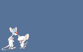 Wallpaper Pinky and brain, cartoon, rats