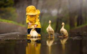 Picture water, yellow, nature, reflection, bird, child, duck