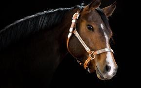 Picture BACKGROUND, HORSE, BLACK, MANE, HEAD, NECK