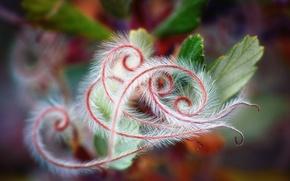 Picture macro, foliage, plants
