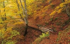 Picture autumn, forest, trees, foliage, beautiful, the ravine, the bridge, autumn forest, pages