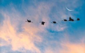 Picture the sky, landscape, birds