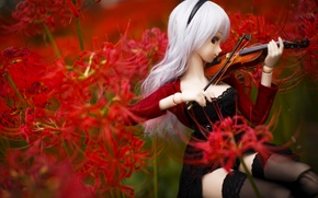 Picture flowers, violin, toy, doll
