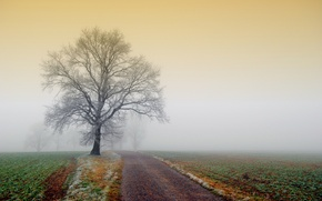 Picture frost, road, field, nature, fog, tree