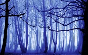 Wallpaper forest, autumn, trees, fog