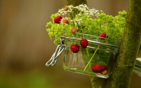 Picture summer, grass, nature, berries, tree, strawberries, Bank