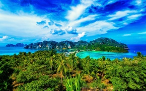 Picture palm trees, Thailand, Phuket, Krabi, Similan Islands