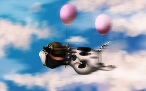 Picture the sky, clouds, balloons, Dog, pilot, flight