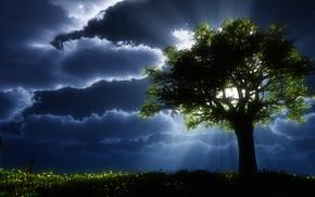 Picture nature, landscapes, tree