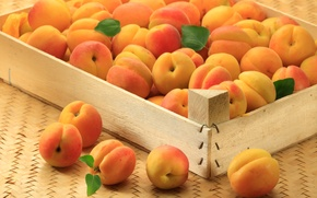 Wallpaper apricot, apricots, fruit