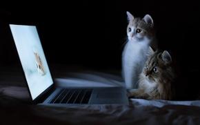 Picture kittens, laptop, Daisy, Hannah, © Benjamin Torode