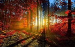 Picture Red, Nature, Autumn