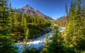 Picture trees, mountains, ate, Canada, river, Vermilion Kootenay