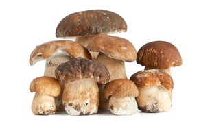 Picture Food, Background, Mushrooms, White